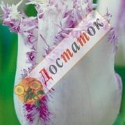 Луковицы осенняя коллекция