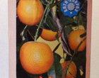 Чистый лист Удобрение Успех Для плодово-декоративных растений